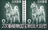 第2次動植物国宝 秋田犬 田型